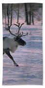 Bull Reindeer In  Siberia Beach Towel