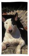 Bull Terrier Dog Beach Towel