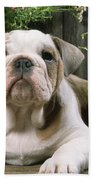 Bulldog Puppy With Flowerpots Beach Towel