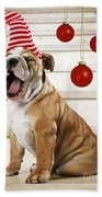 Holiday Bulldog Puppy  Beach Towel
