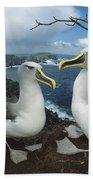 Bullers Albatrosses On Storm-lashed Beach Towel