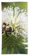 Bumble Bee On Button Bush Flower Beach Towel