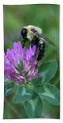 Bumble Bee On Red Clover  Beach Towel