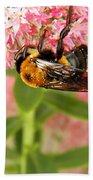 Bumblebee Clinging To Sedum Beach Towel