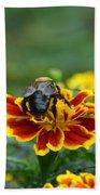Bumblebee On Marigold Beach Towel