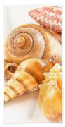 Bunch Of Shells Beach Towel by Jean Noren