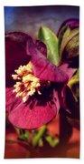 Burgundy Hellebore Flower Beach Towel