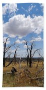 Burned Trees On Colorado Plateau Beach Towel