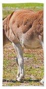 Burro Equus Asinus Beach Towel
