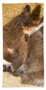 Burro Foal Beach Towel