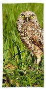 Burrowing Owl At It's Burrow Beach Towel