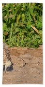 Burrowing Owl IIi Beach Towel