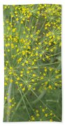 Bursting Dill Plant Beach Towel