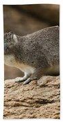 Bush Hyrax 2 Beach Towel