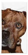 Buster Brown The Boxer Beach Towel by Sandra Clark