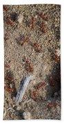 Busy Ants Beach Towel