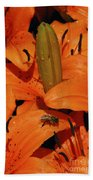 Busy Bee - 774 Beach Towel