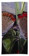 Butterfly 001 Beach Towel