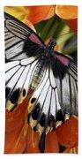 Butterfly 006 Beach Towel