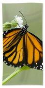 Butterfly 009 Beach Towel
