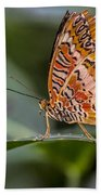 Butterfly Resplendent Beach Towel