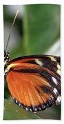 Key West Butterfly 2 Beach Towel