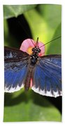 Key West Butterfly 3 Beach Towel