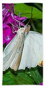 Butterfly 63 Beach Towel