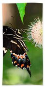 Butterfllies And The Crystal Balls Beach Towel