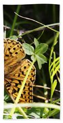 Butterfly At Signal Mountain Beach Towel