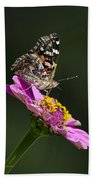 Butterfly Blossom Beach Towel by Christina Rollo