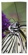 Butterfly Close Up  Beach Towel