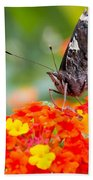 Butterfly Hanging Out On Wildflowers Beach Towel