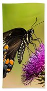 Butterfly In Nature Beach Towel