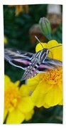 Butterfly Moth Beach Towel
