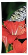 Butterfly On A Lily Beach Towel