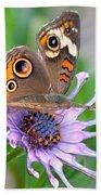 Butterfly On African Daisy Beach Towel