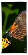 Butterfly On Orange Bloom Beach Towel