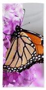 Butterfly On Phlox Flowers Beach Towel