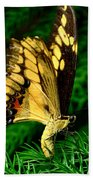 Butterfly On Pine Beach Towel