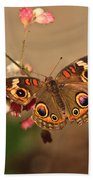 Butterfly On Pink Beach Towel