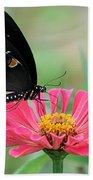 Butterfly On Zinnia Beach Towel