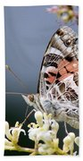 Butterfly - Painted Lady - Tasty Out Here Beach Towel