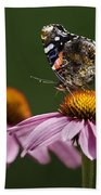 Butterfly Red Admiral On Echinacea Beach Towel