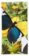 Butterfly Sara Longwing Beach Towel