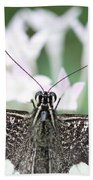 Butterfly View Beach Towel