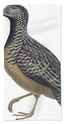 Button Quail Beach Towel by Anonymous