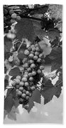 Bw Hanging Thompson Grapes Sultana Poster Look Beach Towel