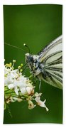 Cabbage Butterfly Beach Towel