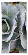 Cabbage Duo Beach Towel